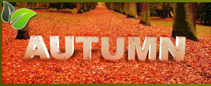 Autumn-Wishes-Facebook-Cover-Picture
